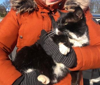Harjumaalt leiti püünisraudadesse lõksu jäänud kass